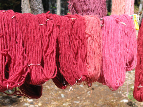 dyeing-with-bugs-cochineal